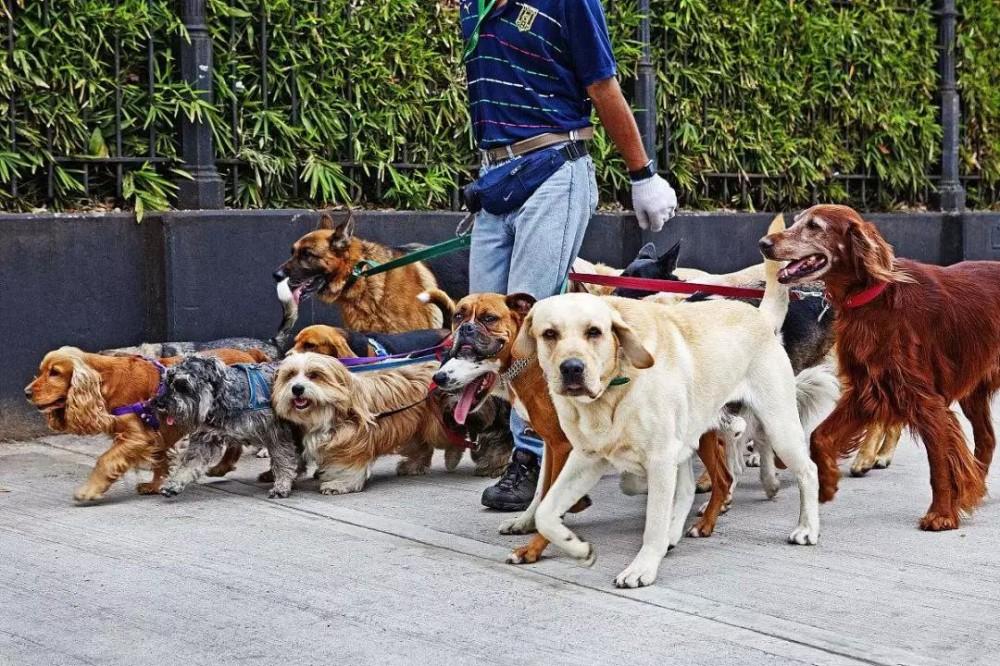 分析:说说宠物用品市场、宠物赚钱