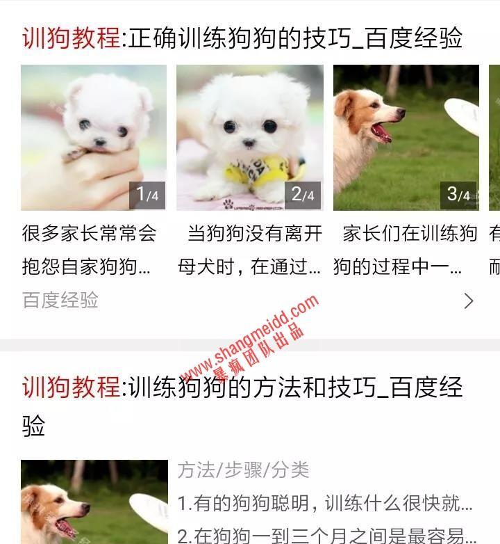 暴利赚钱的蓝海市场:卖训狗教程,几乎接近0成本的一个项目